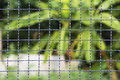 Steel mesh background nature and beautiful Stock Image