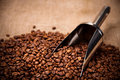 Steel scoop in coffee beans Royalty Free Stock Photo