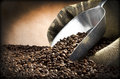 Steel scoop and coffee beans close up on the white Stock Images