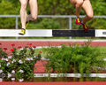 Steeplechase Royalty Free Stock Images