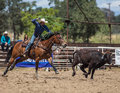 Steer Roping Time Royalty Free Stock Photo