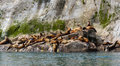 Stellar sea lion pullout endangered lions congregate on south marble island within glacier national park alaska Stock Photos