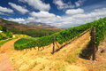Stellenbosch the heart of the wine growing region in south afri vineyards western cape africa simonsberg mountain range as a Stock Photos