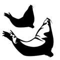 Steller sea lion vector design
