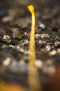Stem macro photograph of the of a leaf on the ground in the forest Royalty Free Stock Photos