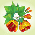 Stem with orange abutilon flower leaf and bud on the light green background floral elements in contour style Royalty Free Stock Photography