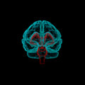 Stem part human brain in x ray view Royalty Free Stock Images