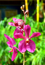 A stem of purple colored orchids in green outdoor park Royalty Free Stock Image