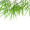 Stems of beautiful green bamboo leaves Stock Image