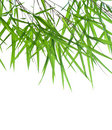 Stems of beautiful green bamboo leaves Stock Photos