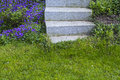 Step stepstones and flowers in the garden Stock Images