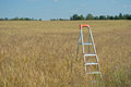 Stepladder in the field Stock Images