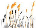 Steppe grass on white background Royalty Free Stock Photo