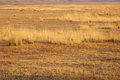 Steppe warmed by the sun withered grass Royalty Free Stock Photo