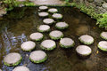 Stepping stones monte palace tropical garden funchal madeira island Stock Photography