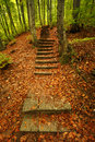 Steps in the forest Stock Photos