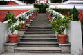 Steps with potted plants Royalty Free Stock Photos