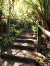 Steps in the rain forest at the Dandenong ranges Royalty Free Stock Photo