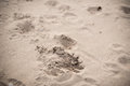 Steps on a sand Royalty Free Stock Photo