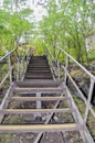 Steps in Sunken Forest Royalty Free Stock Photo
