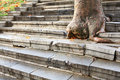 Steps and tree Royalty Free Stock Images