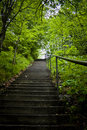 Steps in the woods Royalty Free Stock Photo
