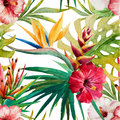 Sterlitzia tropical pattern Royalty Free Stock Photo
