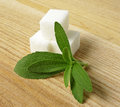 Stevia rebaudiana - herb Stock Photos