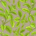 Stevia vector pattern
