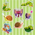 Sticker set for different types of insects Royalty Free Stock Photo