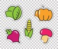 Stickers with images of vegetables. Cabbage, pumpkin, beets, corn, mushrooms Royalty Free Stock Photo