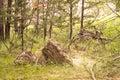 Sticks and Stones, A Baby Deer Fawn at Badlands National Park, South Dakota, USA Royalty Free Stock Photo
