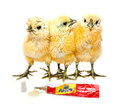 Sticky situation funny chicks image of in a image is of course staged Royalty Free Stock Images