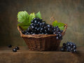 Still life with black grapes in a basket on the table Stock Images