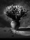 Still life with black and white bouquet of dried roses in black and white clay vase grunge background Stock Photos