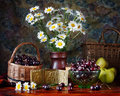 Still life with bouquet of camomile and cherries Royalty Free Stock Photo