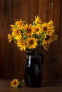 Still life bunch of beautiful sunflowers against a wooden wall Stock Photography