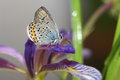 Still life with butterfly and orris a beautiful close up a soft delicate background Stock Images