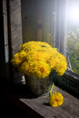 Still life with dandelions on a windowsill yellow in tin pail an old Stock Photo