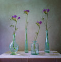Still life with freesias in bottles Royalty Free Stock Photo