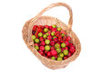 Still life with fresh red apples red rowan small and green pears Royalty Free Stock Photo