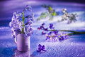 Still life with hyacinth flower in gentle violet Royalty Free Stock Photo
