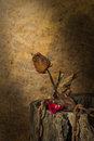 Still life metaphorical roses on valentine s day Royalty Free Stock Images
