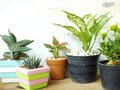 Still life natural house plants on wooden background texture with space copy Royalty Free Stock Photo
