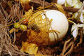Still-life with ostrich's decorated egg. Royalty Free Stock Photo