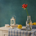 Still life with rose in the bottle and lemons Royalty Free Stock Photos