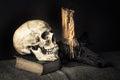 Still life skull Stock Photography