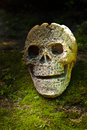 Still life with skull in the forest scary head Stock Image