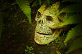 Still life with skull in the forest scary head Stock Photography