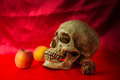 Still life with skull human with apples